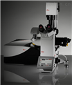 Leica TCS SP8激光共聚焦显微镜